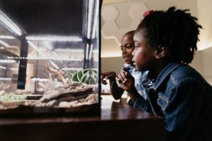Two children look at bugs behind glass at the Royal Alberta Museum.