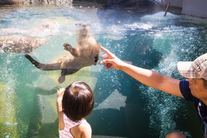 A little girl points at a waving sea otter