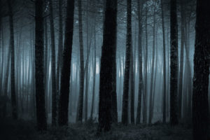 Dark forest of trees at night.