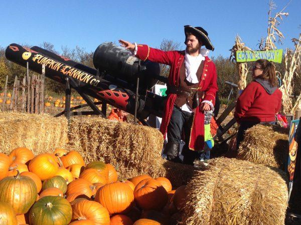 A pirate stands over a heap of pumpkins