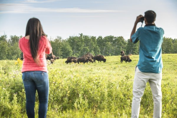 Two people watching bison in the distance.
