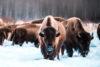Edmonton Elk Island National Park Explore Edmonton