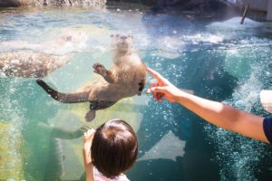 Otters at the Edmonton Valley Zoo